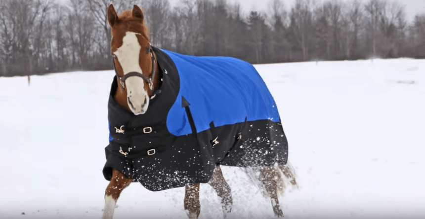 Measure a Horse Blankets