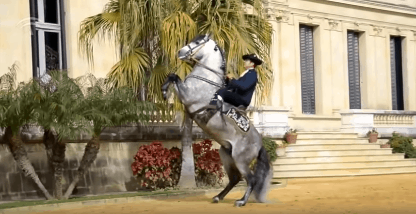 Most Common Mistakes Made by Beginner Horse Riders