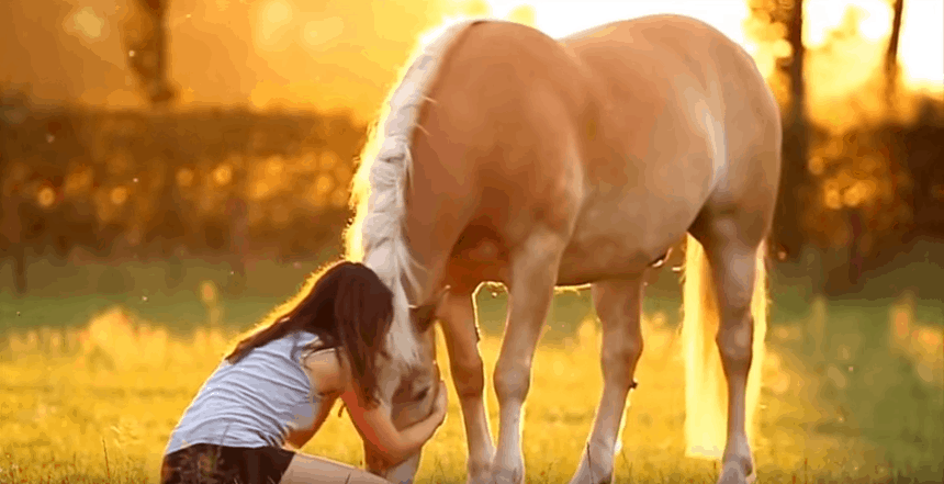 Best Horse Feed for Weight Gain