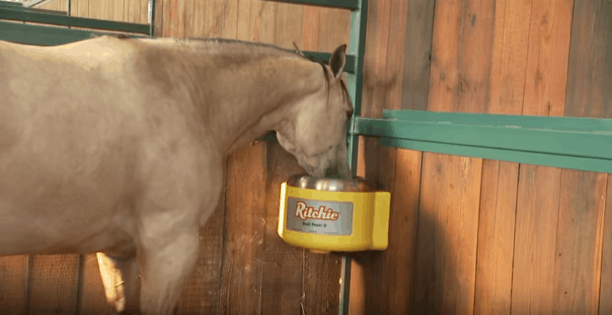 Best Horse Automatic Waterer