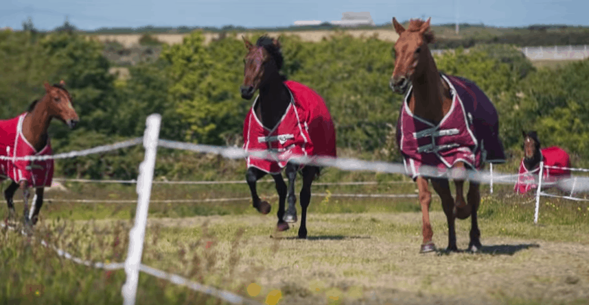 Best Horse Electric Fence