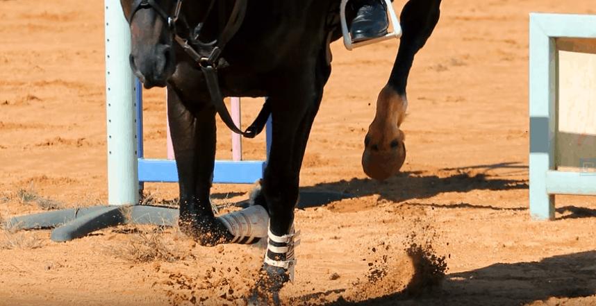 Best Horse Joint Supplements