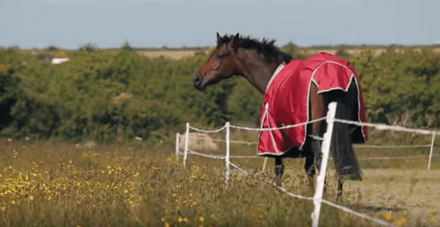 Best Blankets for Horses