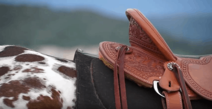 Best Dakota Saddle