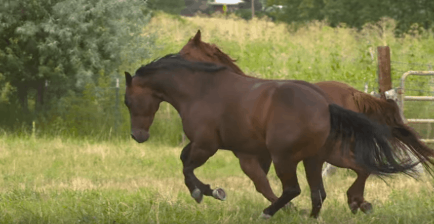Put Weight on a Horse