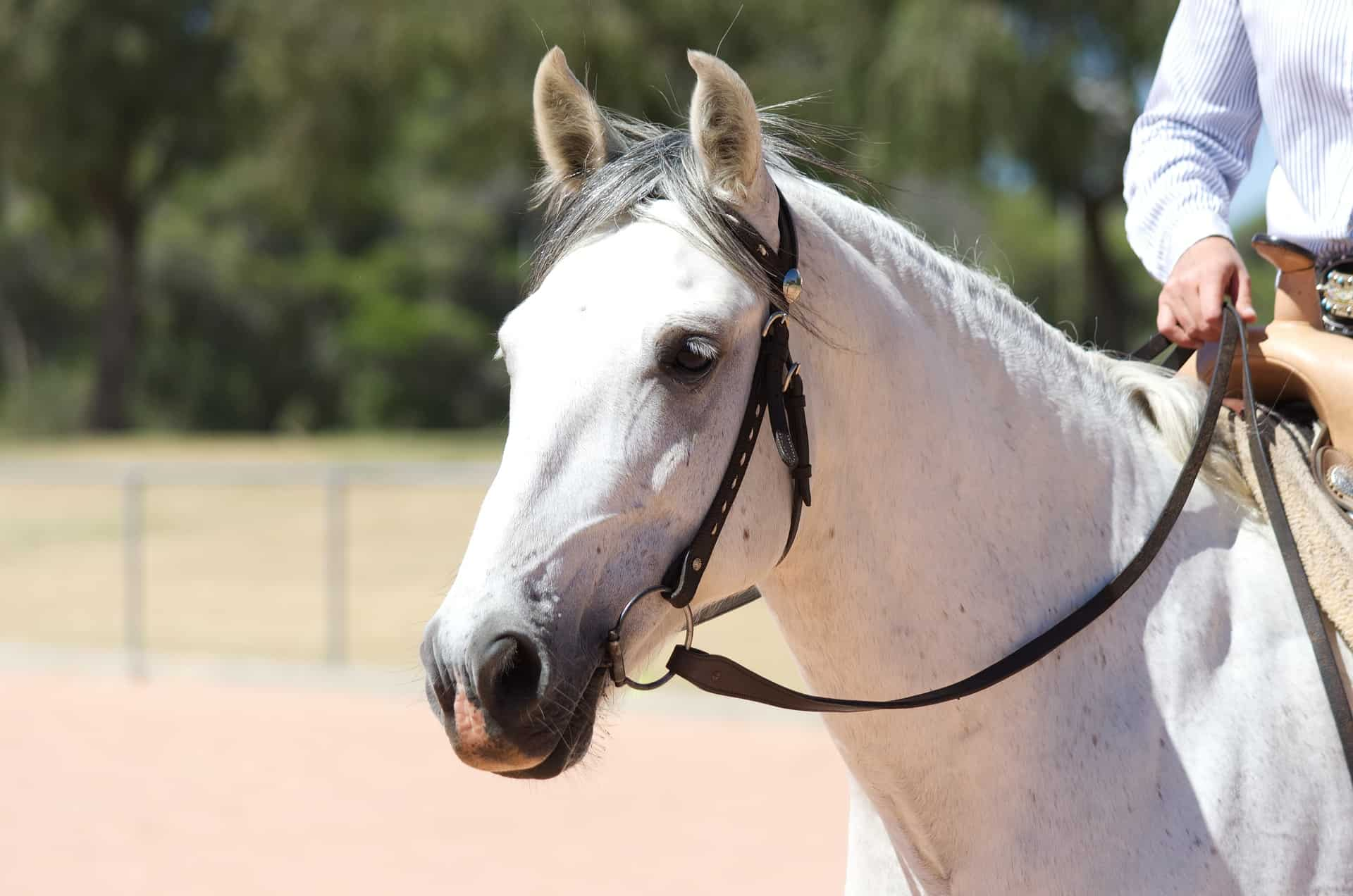 best bridles for horses