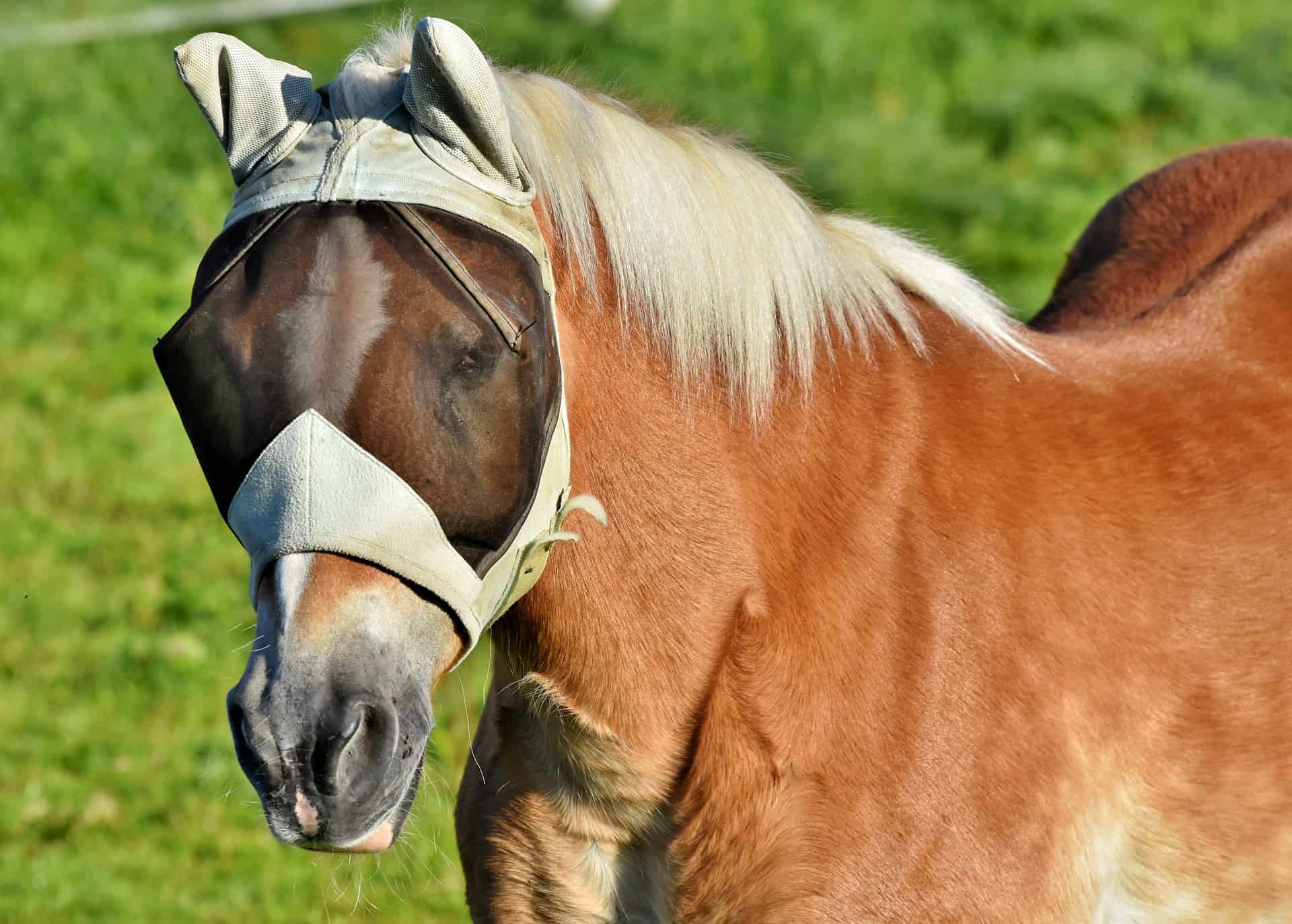 Best Horse Fly Masks