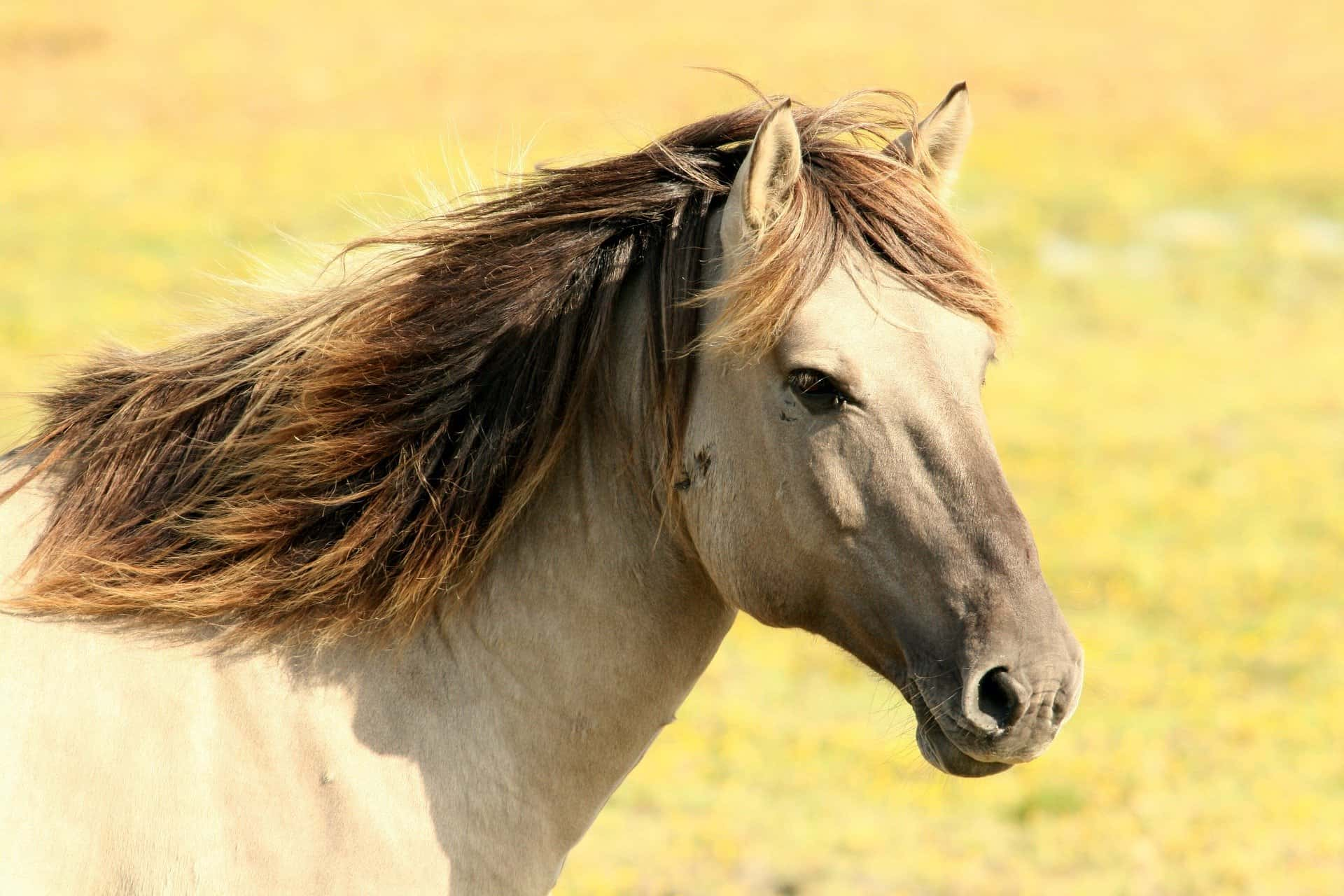 How long is a horse pregnancy