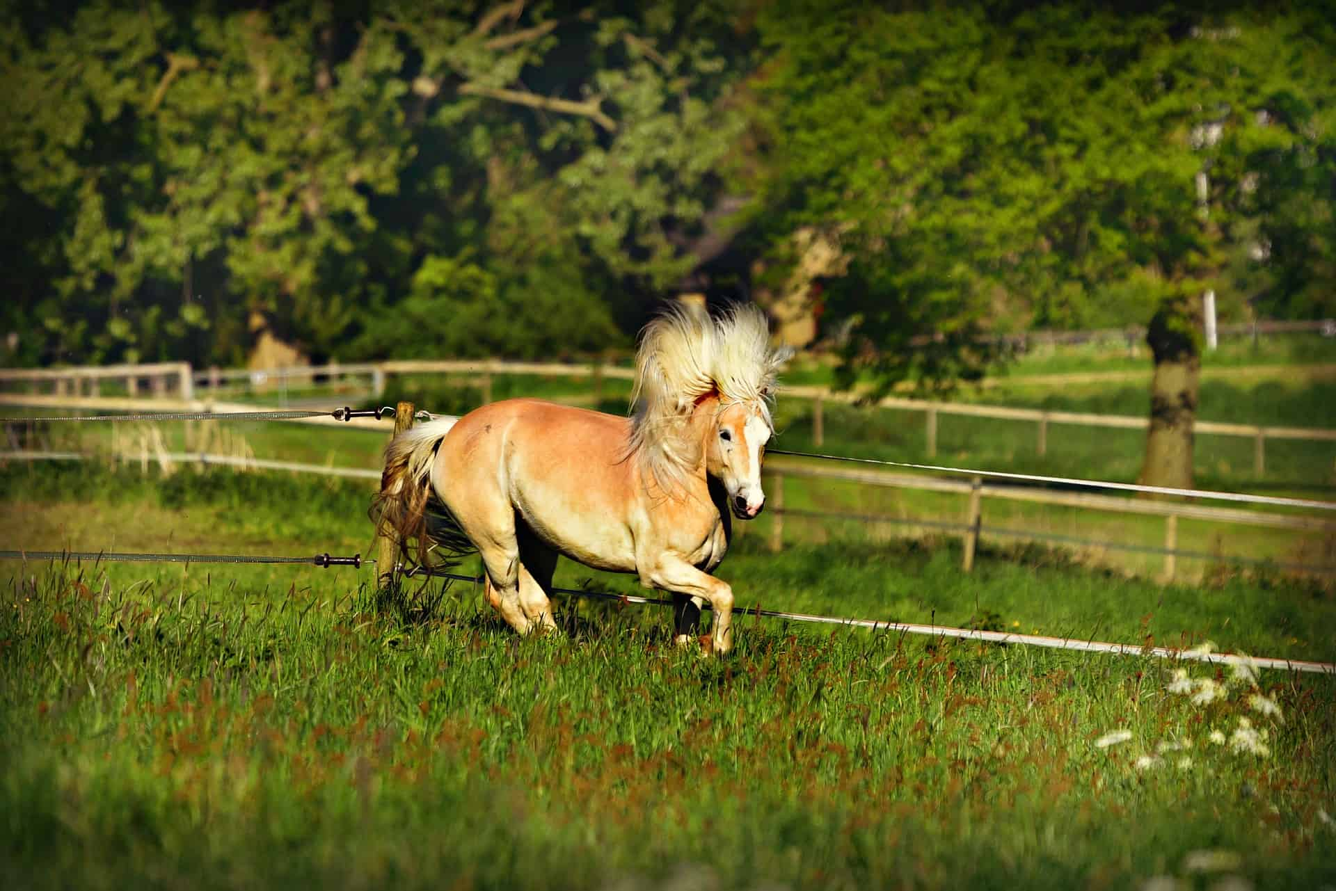 Best Electric Fence Charger for Horses