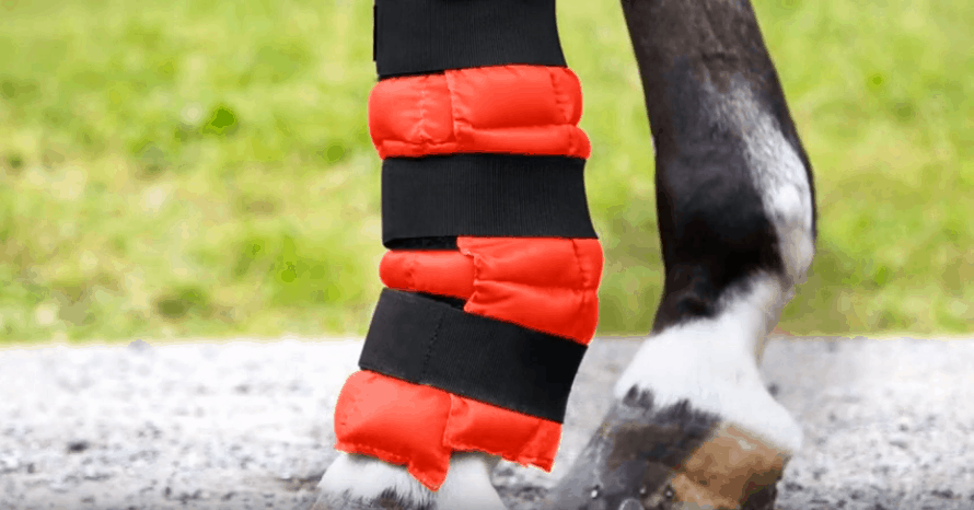 Best Ice Boots for Horses
