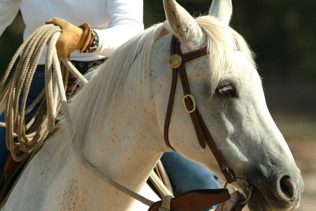 Best Lead Rope for Hacking Horses