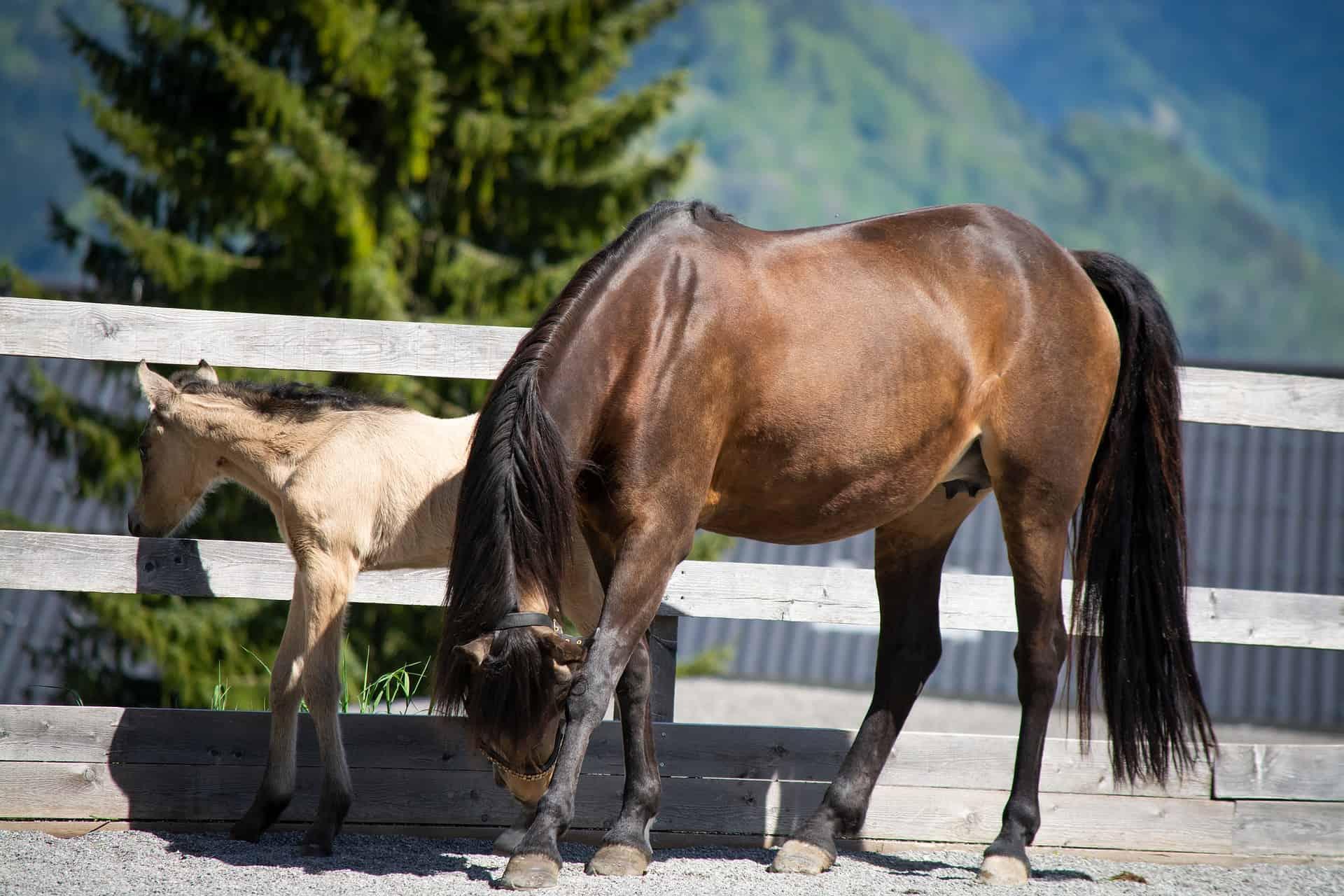 best Horse Coat Oil