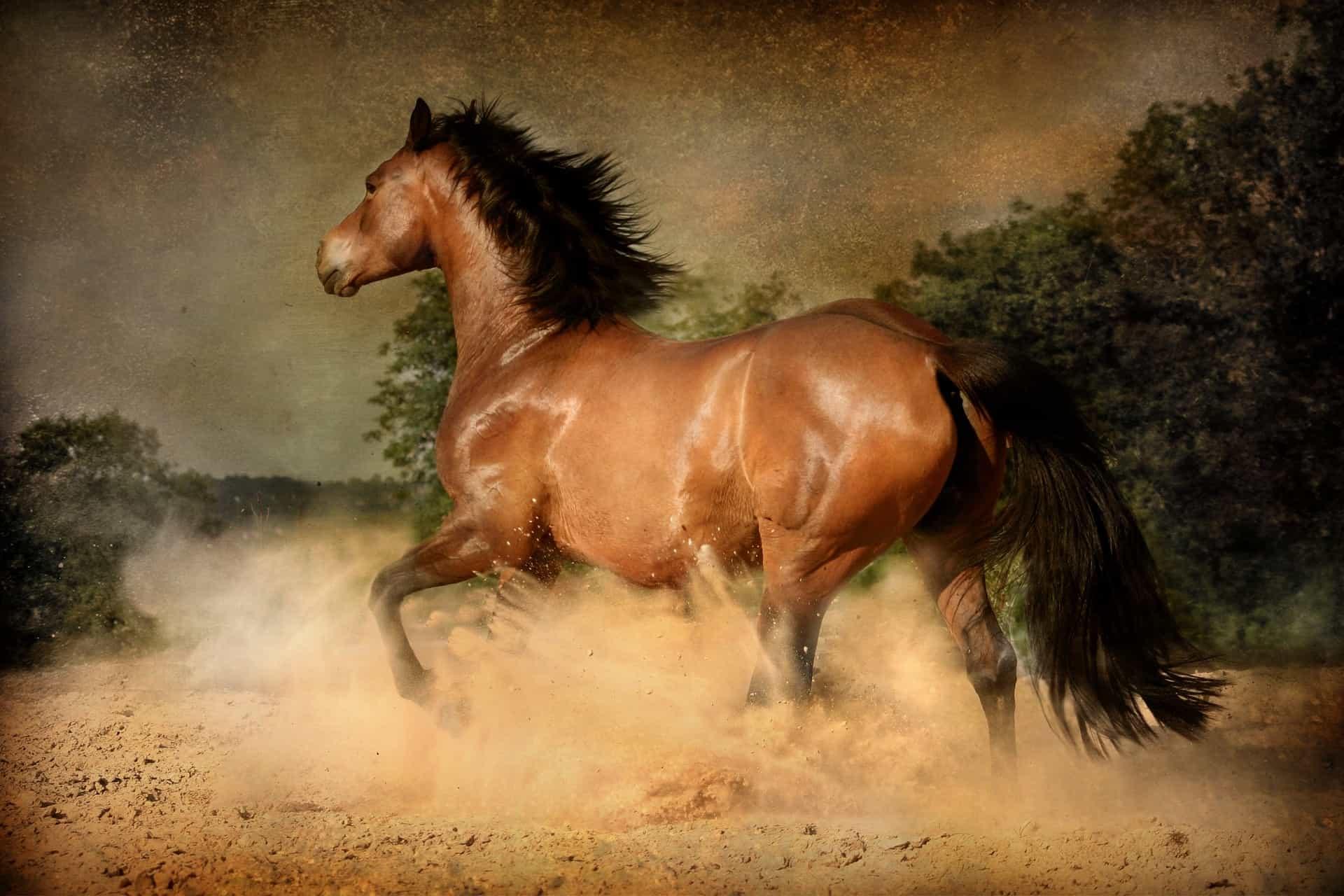 best Horse oils