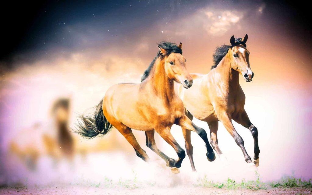 best horseshoes for flip