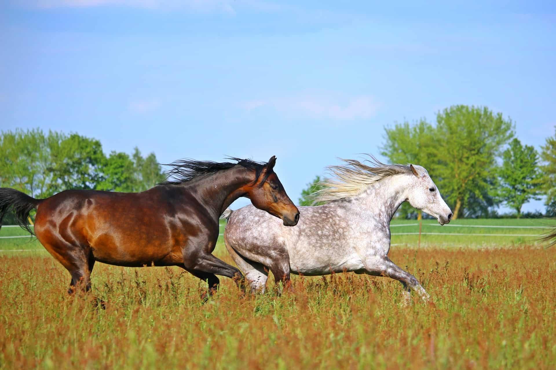 best oil for horses coat