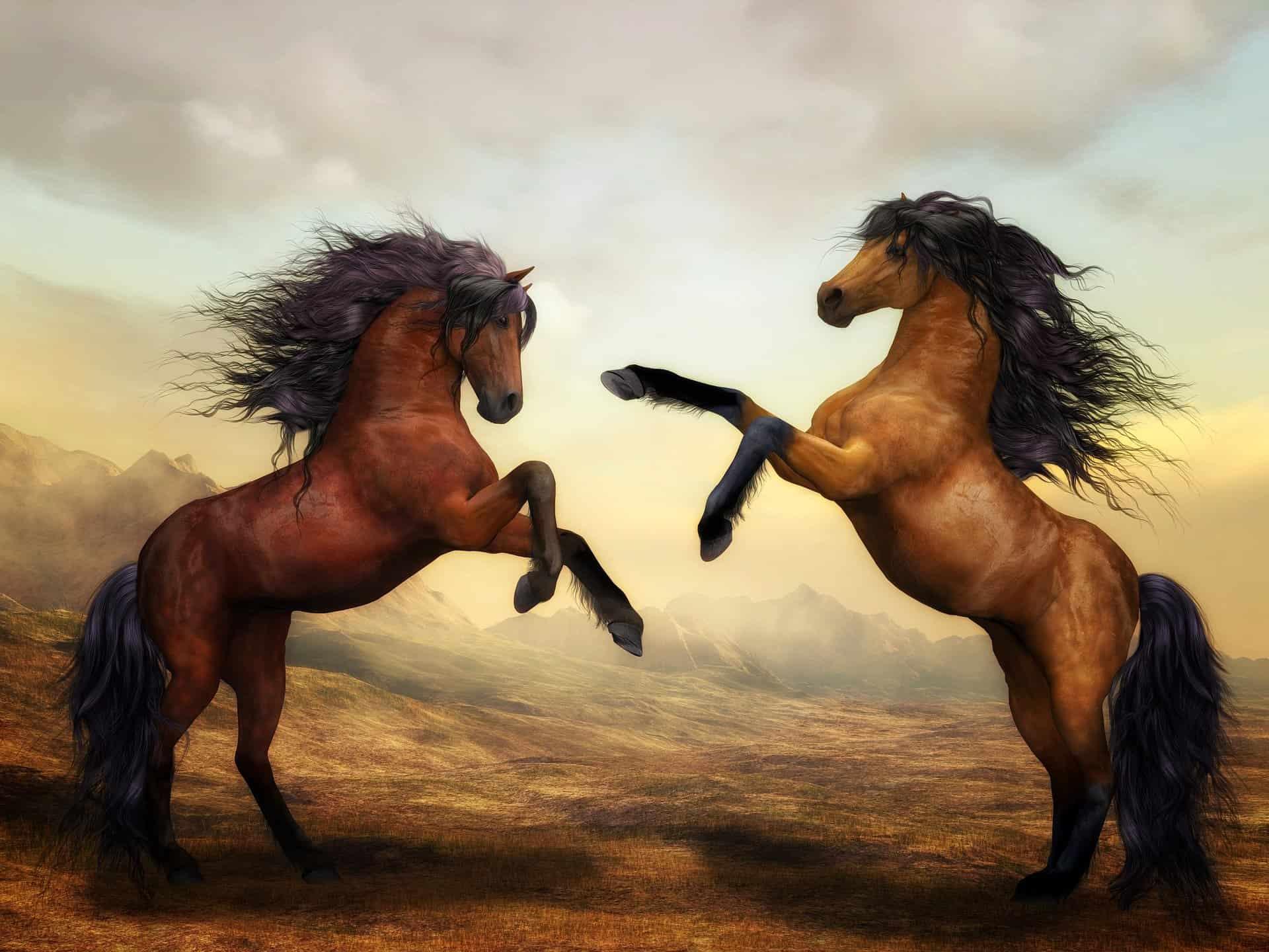 Horses Mate