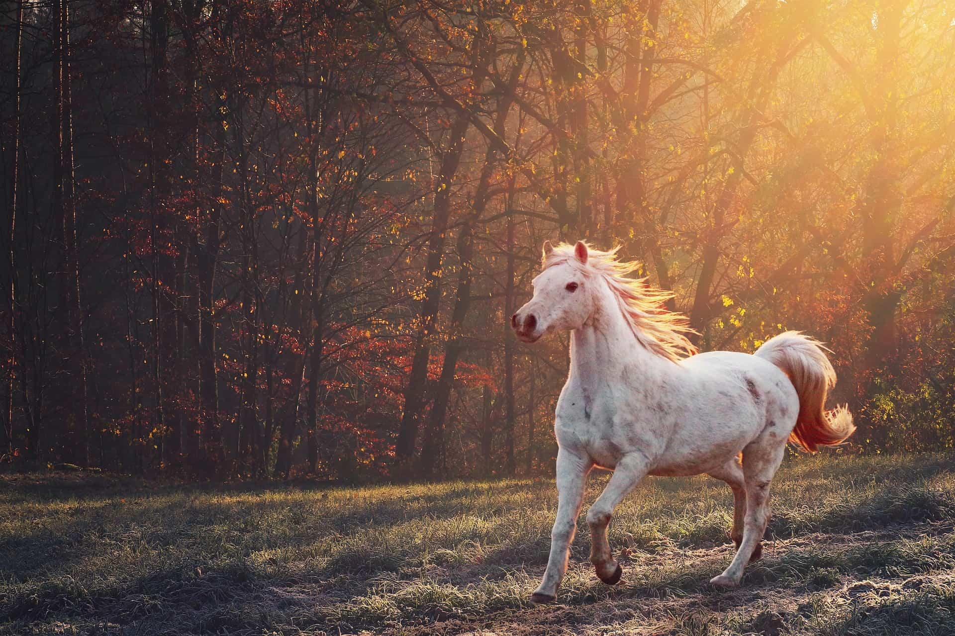 Glucosamine horses UK