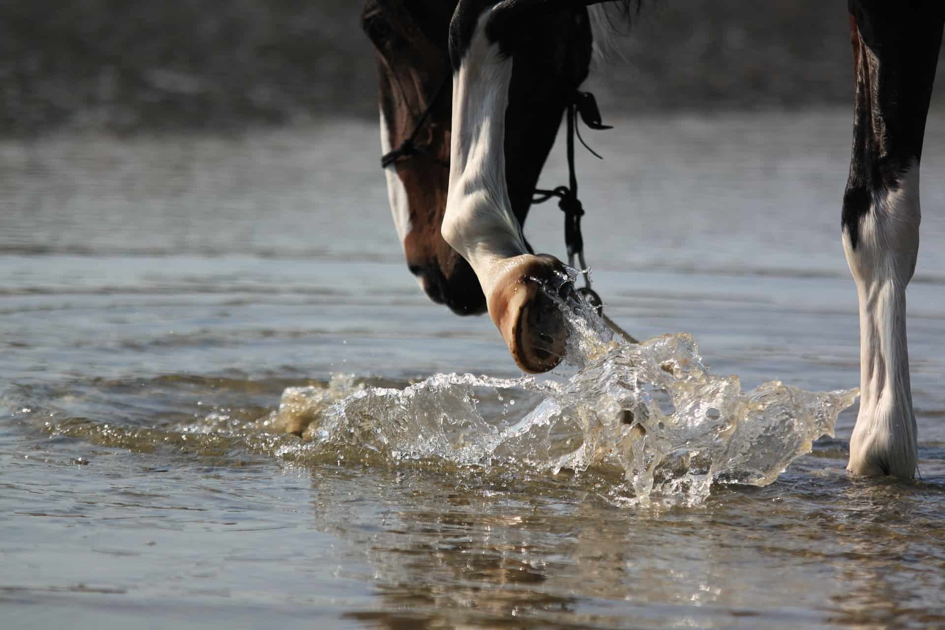 Hoof Supplement for Horses