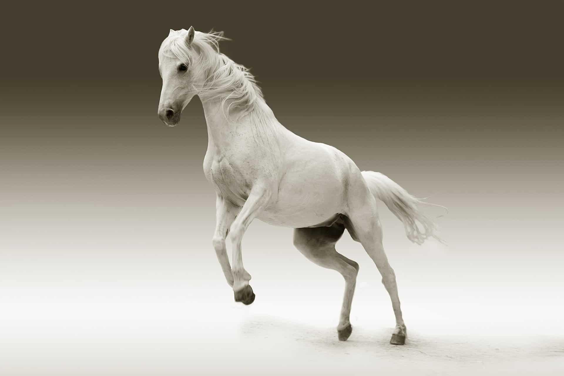 Horse Glucosamine UK