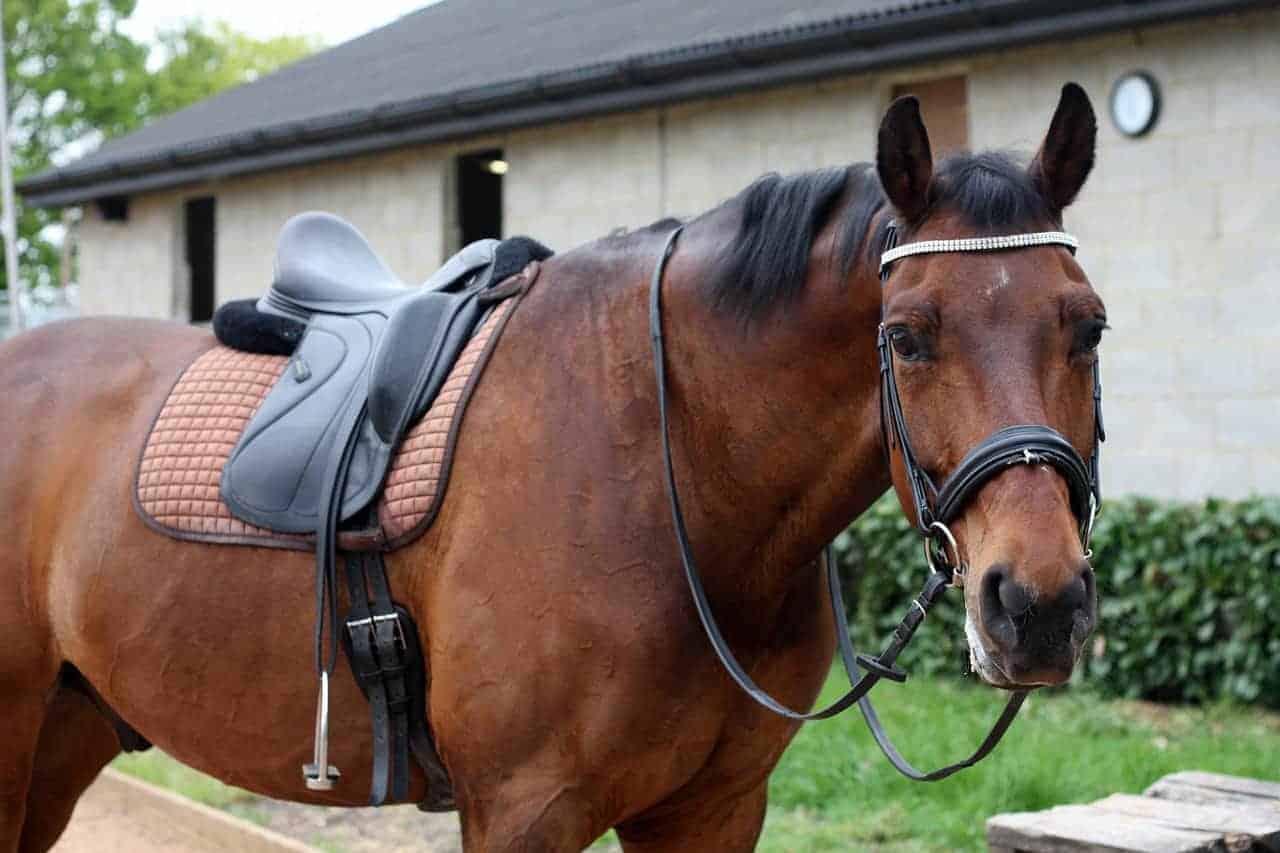 Wintec Saddle