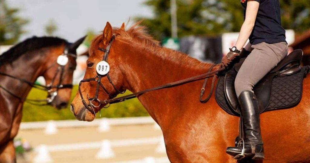 abetta saddle reviews