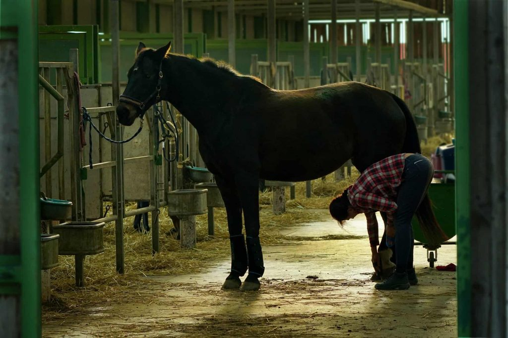 best Hoof Supplement for Horses