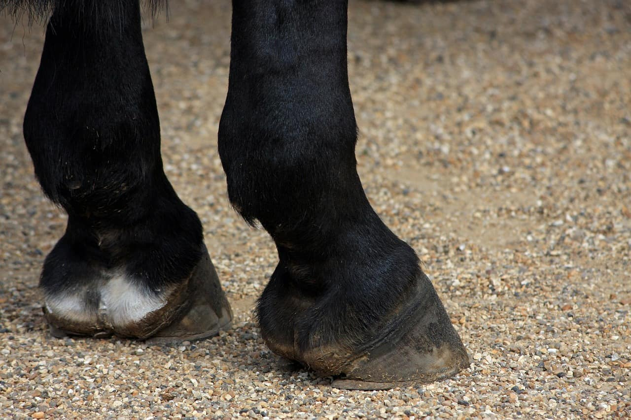 best Horse Hoof Supplement