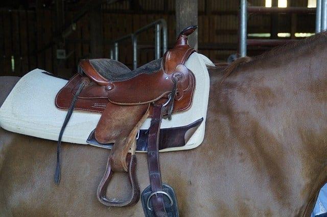 King Series Saddles