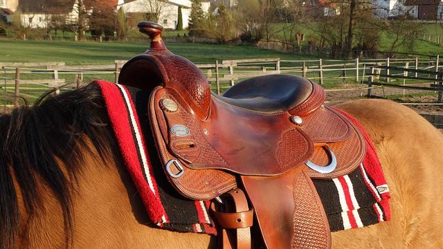 big horn saddle reviews