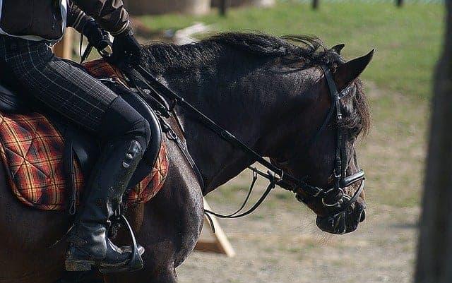 Big Horn Saddles