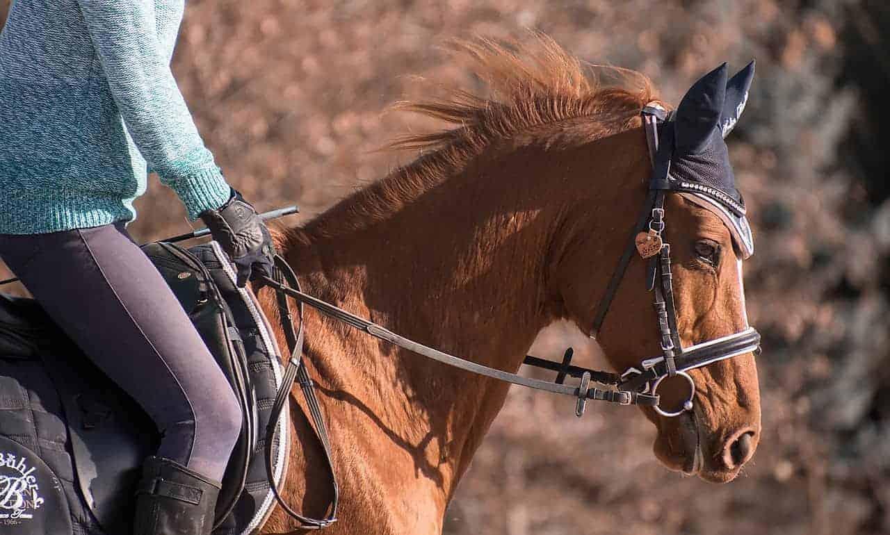 What Size English Saddle